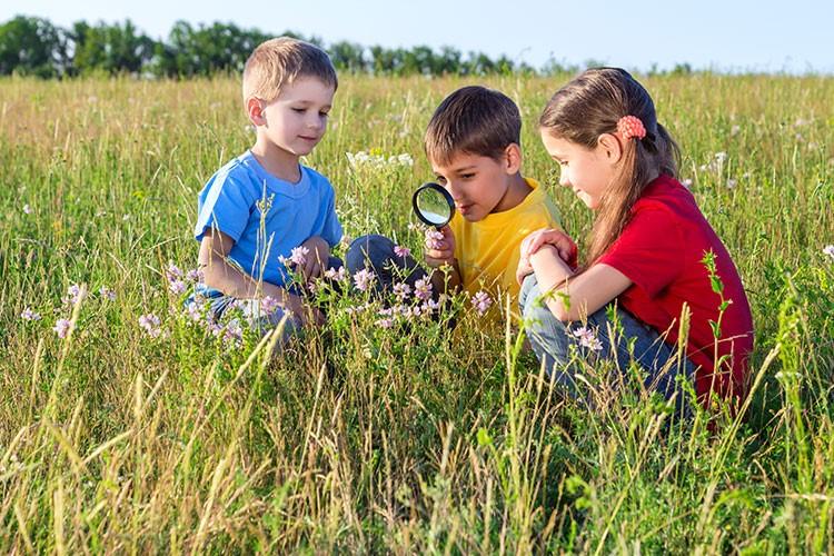 La educación ambiental, entendimiento del porqué estamos vivos