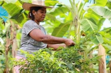 Microempresas de Colombia presente en el primer congreso nacional de inclusión financiera rural.