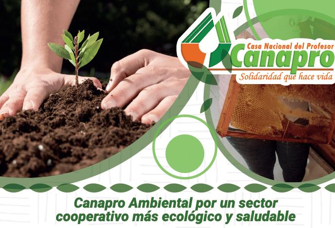 Plantar árboles esa responsabilidad que mitiga el dolor de la tierra