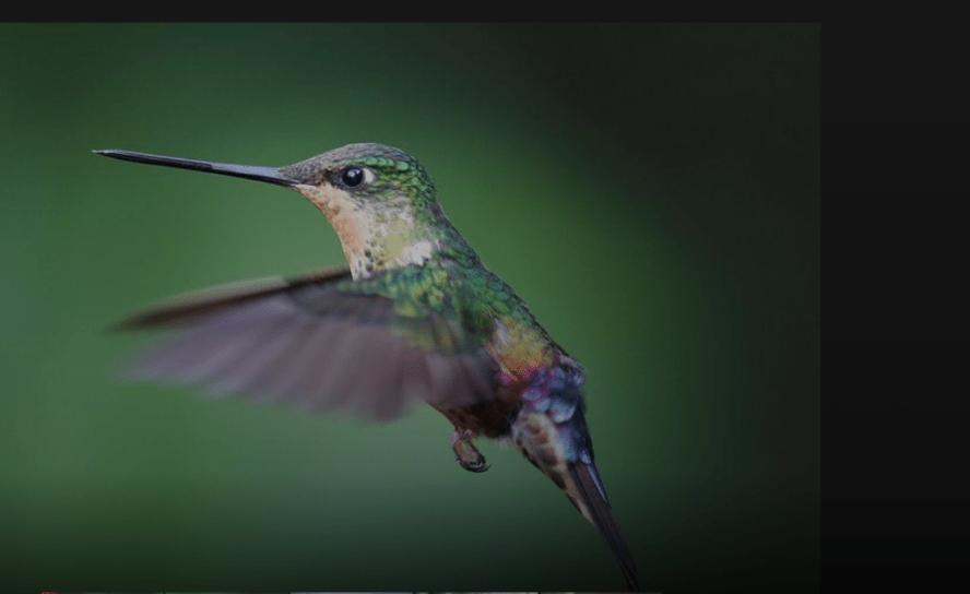 El santuario de colibríes oxigena el medio ambiente bogotano