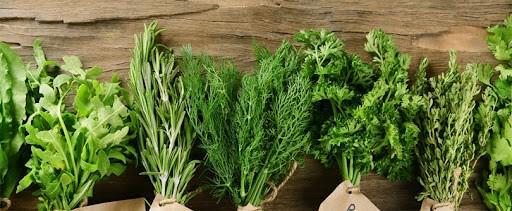 Hierbas aromáticas, una infusión semestral de 20 millones de dólares